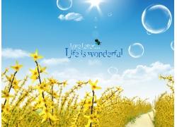 黄花泡泡风景图片