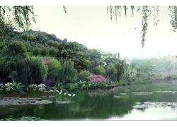 湖泊柳枝风景素材