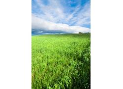 绿草青青自然风景