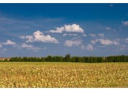 秋天的田野自然风景