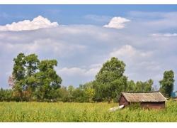 野外的小屋自然风景