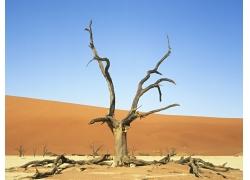 蓝天下的沙漠风光