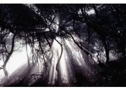 自然风景黑白照片