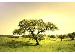 大自然风景