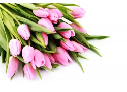 美丽郁金香鲜花