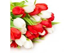 美丽郁金香花束