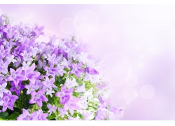 梦幻鲜花背景