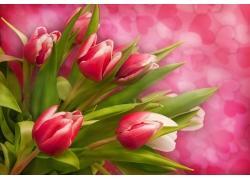 梦幻温馨鲜花背景