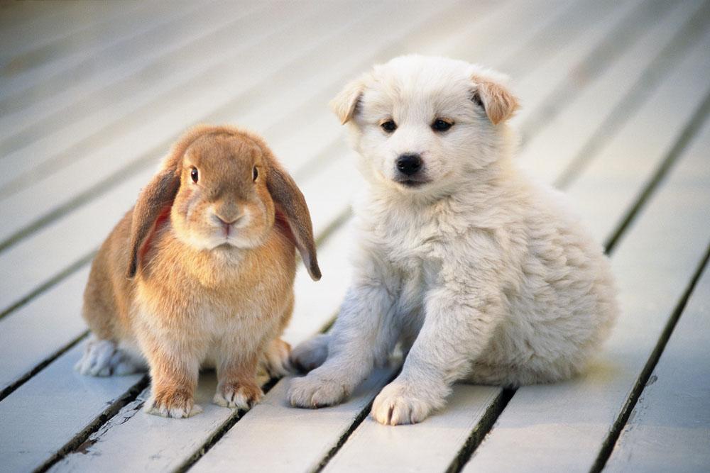 可爱的宠物小狗