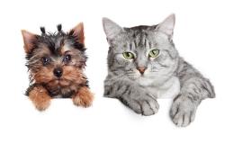 可爱的小狗与小猫
