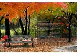 美丽秋天树林风景