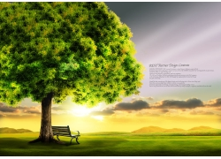 美丽草地树木风景