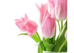温馨鲜花背景