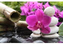 SPA水疗石与鲜花