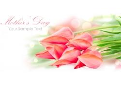 母亲节鲜花背景