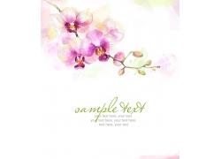 水彩鲜花背景底纹