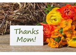 母亲节鲜花与贺卡