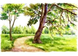 草地小路旁的大树