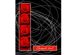 红色玫瑰花曲线背景