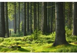 公园树林背景